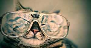 Happy Kitty Resolutions